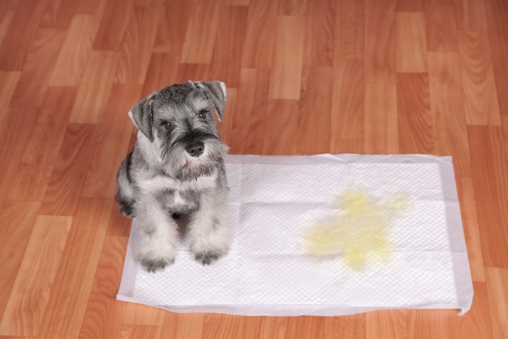 Use puppy pads to stop dogs from peeing inside the house