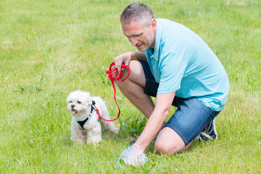 walk your dog often to prevent them from pooping and peeing indoors